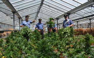 http://www.seguonews.it/cannabis-verde-sicilia-microclima-ideale-regione-in-cima-per-piantagioni-illegali