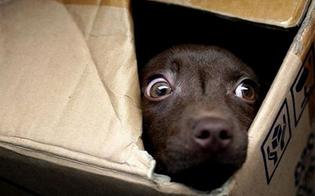 http://www.seguonews.it/apericena-lav-stasera-a-caltanissetta-una-raccolta-fondi-per-aiutare-gli-animali