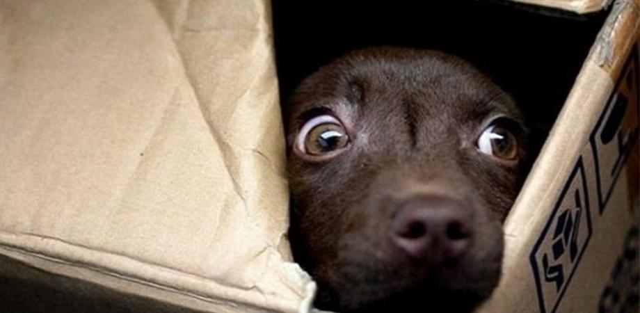 Violenza sugli animali nel Nisseno. Quattro cuccioli di cani uccisi a bastonate, denuncia dell'Oipa