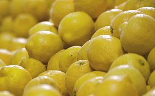 https://www.seguonews.it/catania-respinti-due-containers-di-limoni-provenienti-dallargentina-con-un-pericoloso-parassita