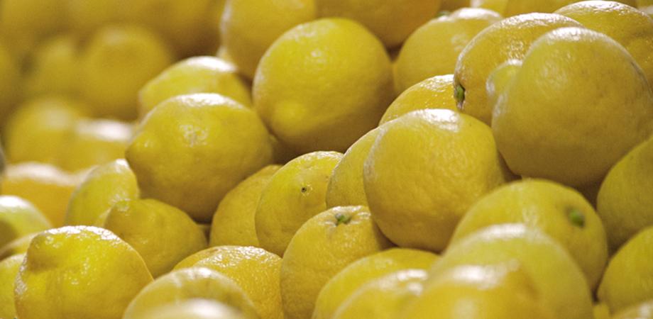 Limoni utilizzati come disinfettanti naturali, cresce la richiesta: in Sicilia si ottiene più dell'87% del raccolto nazionale
