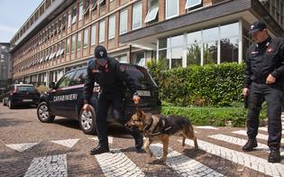 http://www.seguonews.it/mussomeli-cani-antidroga-sui-bus-linea-scuola-hodierna-sequestrata-hashish-toilette