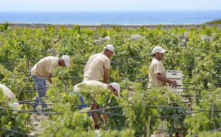 https://www.seguonews.it/terreni-demaniali-in-concessione-ai-giovani-agricoltori-primo-bando-con-mille-ettari-
