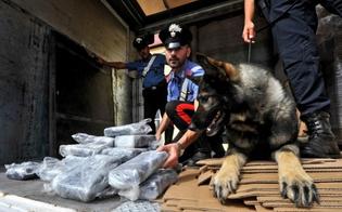 https://www.seguonews.it/fiuto-cheval-scova-vivaio-marijuana-nel-nisseno-arresto-sequestrati-2-kg-erba