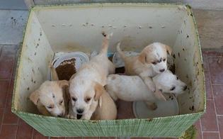 http://www.seguonews.it/gela-lasp-sospende-tutte-le-operazioni-ambulatoriali-veterinarie-in-caso-di-urgenza-e-possibile-procedere-ad-una-prenotazione