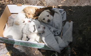 http://www.seguonews.it/caltanissetta-lodissea-di-un-cittadino-cuccioli-abbandonati-davanti-la-mia-casa-ma-che-fare-se-non-posso-curarli