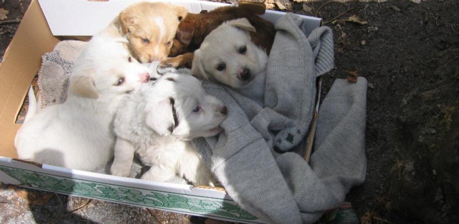 """Caltanissetta, l'odissea di un cittadino. """"Cuccioli abbandonati davanti la mia casa, ma che fare se non posso curarli?"""""""