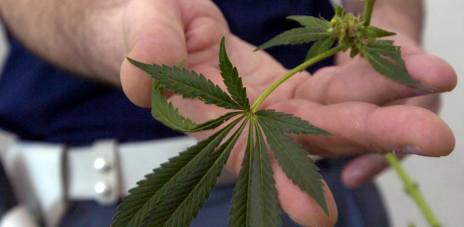 Niscemi, la polizia bussa alla porta e lui getta un sacchetto di marijuana dalla finestra: arrestato un 18enne