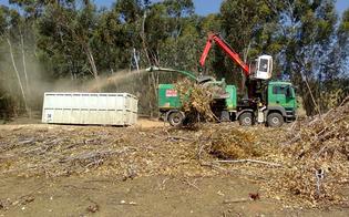 https://www.seguonews.it/denuncia-legambiente-boschi-tagliati-mazzarino-per-centrale-biomasse-esposto-allanticorruzione