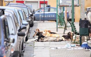 http://www.seguonews.it/branco-di-randagi-accerchia-auto-in-via-don-minzoni-donna-ostaggio-per-dieci-minuti-e-stato-un-incubo