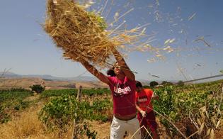 http://www.seguonews.it/agriract-sabato-tour-dei-giovani-del-rotary-in-aziende-e-fattorie-nissene