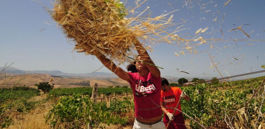 """""""AgriRact"""", sabato tour dei giovani del Rotary in aziende e fattorie nissene"""