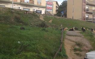 http://www.seguonews.it/caltanissetta-appicca-incendio-alla-scarpata-di-via-padre-pio-poliziotti-bloccano-piromane-allopera-sventato-rogo