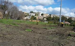 http://www.seguonews.it/nasce-giardino-legalita-mercoledi-posa-prima-pietra-san-luca