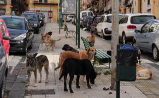http://www.seguonews.it/nasce-a-caltanissetta-il-comitato-pro-randagi-i-promotori-troppe-violenze-sugli-animali-occorre-protezione