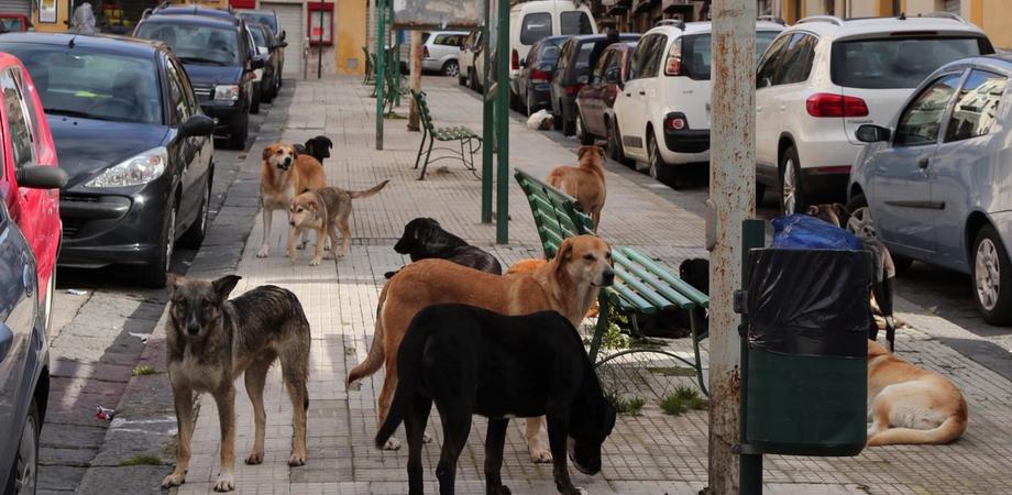 """Nasce a Caltanissetta il comitato pro randagi, i promotori: """"Troppe violenze sugli animali, occorre protezione"""""""
