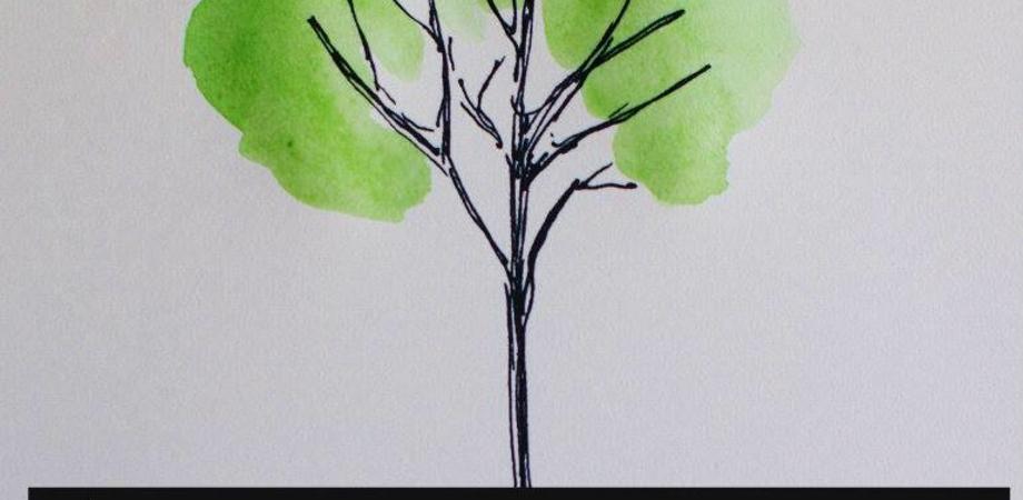 Martedì al Ruggero Settimo la piantumazione di un albero per ricordare i migranti morti nel Mediterraneo