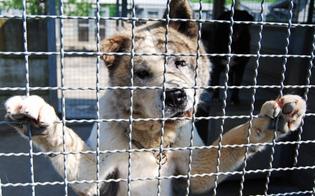 http://www.seguonews.it/randagismo-il-wwf-scrive-al-sindaco-di-caltanissetta-poche-sterilizzazioni-e-troppi-animali-rimangono-per-sempre-nei-canili-
