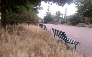 http://www.seguonews.it/caltanissetta-citta-a-misura-di-degrado-in-piazza-della-repubblica-erbacce-e-rifiuti-ma-chi-pulisce