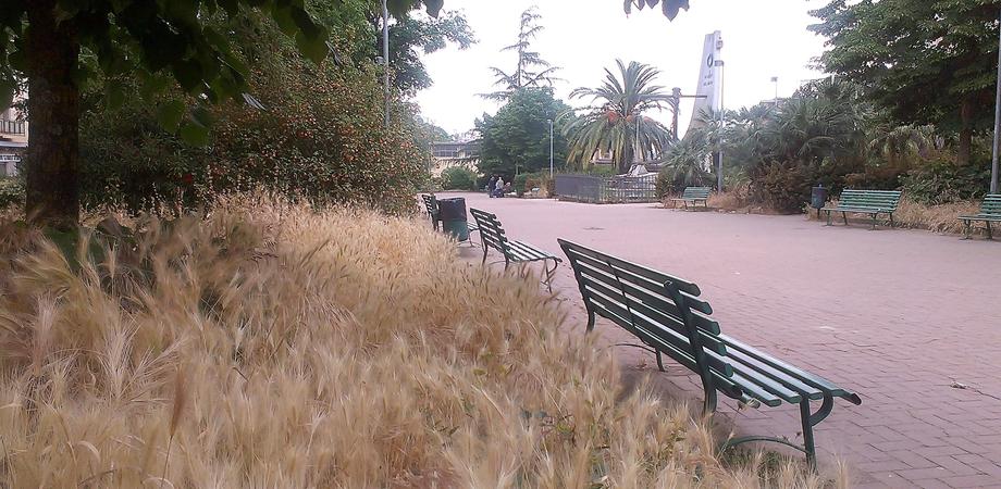 Caltanissetta, città a misura di degrado. In piazza della Repubblica erbacce e rifiuti, ma chi pulisce?