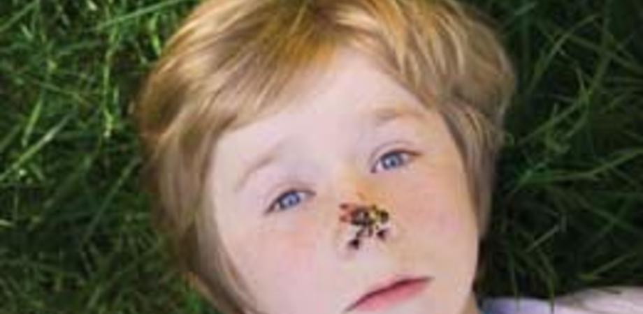 Punture di api e vespe: la Croce Rossa spiega come intervenire