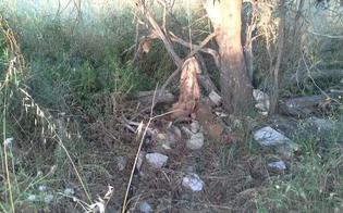 http://www.seguonews.it/orrore-nelle-campagne-di-gela-quattro-pitbull-impiccati-a-un-albero-forse-uccisi-dopo-lotta-clandestina