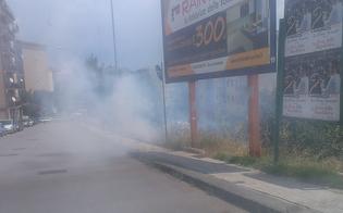http://www.seguonews.it/incendio-nella-scarpata-di-via-leone-xiii-larea-e-del-comune-ma-ora-il-sindaco-ruvolo-si-automultera
