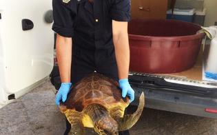 http://www.seguonews.it/pescatore-salva-al-largo-di-gela-una-tartaruga-caretta-caretta-ferita-presto-sara-liberata-in-mare