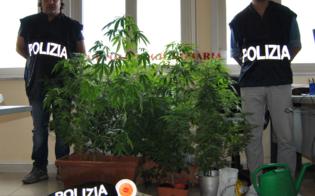 http://www.seguonews.it/mini-serra-di-marijuana-in-casa-boom-di-casi-nel-nisseno-giovane-scoperto-dalla-polizia-finisce-in-manette