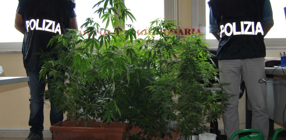 Mini serra di marijuana in casa, boom di casi nel Nisseno. Giovane scoperto dalla Polizia finisce in manette