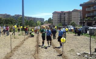 http://www.seguonews.it/giardino-della-legalita-il-comitato-san-luca-non-e-opera-di-compensazione-della-cmc