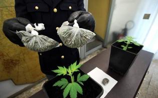 http://www.seguonews.it/una-mini-piantagione-di-marijuana-fra-le-mura-di-casa-giovane-col-pollice-verde-denunciato-dalla-polizia