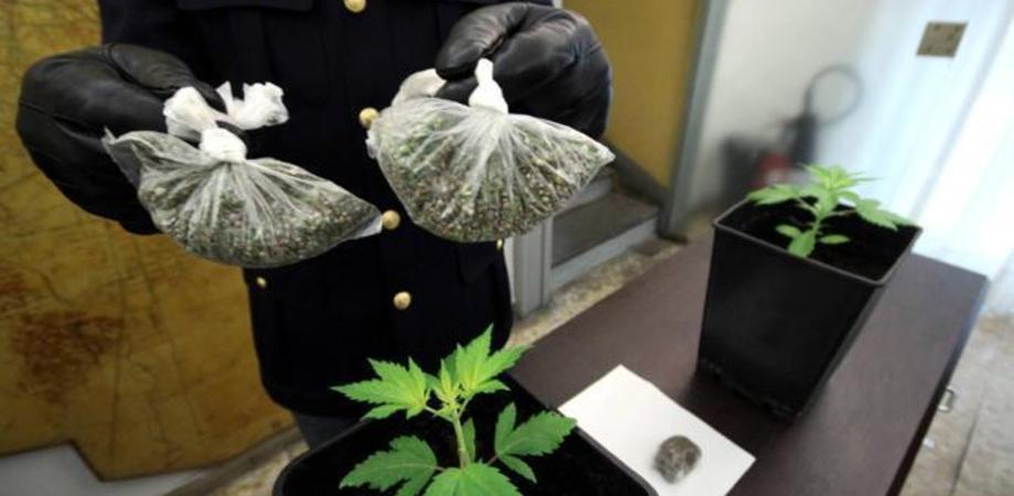 Coltiva pianta di marijuana in camera da letto. Carabinieri denunciano giovane nisseno