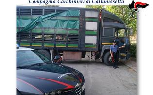 https://www.seguonews.it/tentato-furto-di-bestiame-a-resuttano-carabinieri-trovano-autocarro-con-52-vitelli