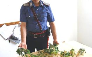 https://www.seguonews.it/giardiniere-ignoto-a-sommatino-carabinieri-trovano-piante-di-marijuana-in-aperta-campagna