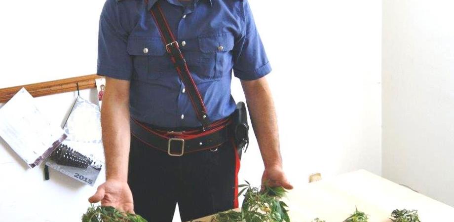 Giardiniere ignoto a Sommatino. Carabinieri trovano piante di marijuana in aperta campagna