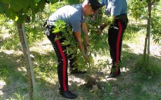 http://www.seguonews.it/coltivazione-di-cannabis-nuovo-sequestro-nel-nisseno-arrestati-padre-e-figlio-dai-carabinieri