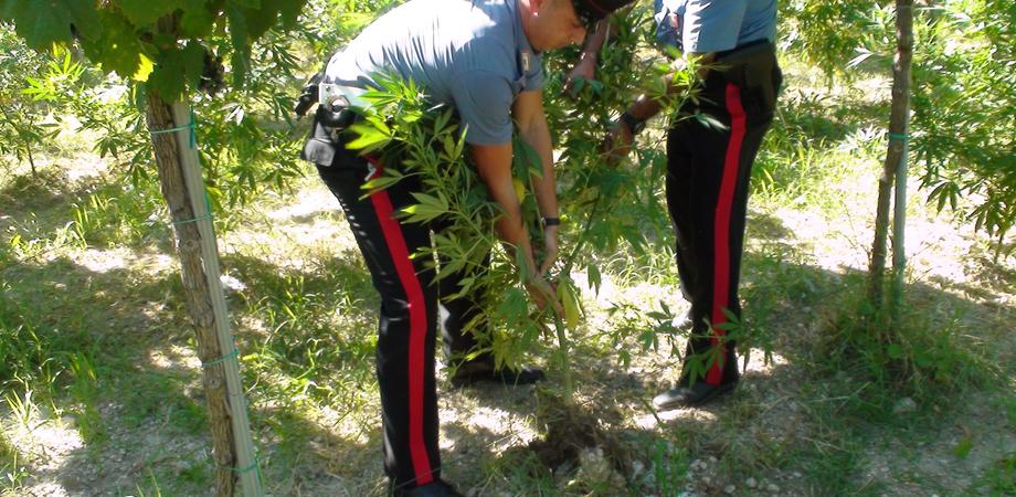 Coltivazione di cannabis, nuovo sequestro nel Nisseno: arrestati padre e figlio dai carabinieri