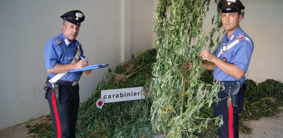 Scoperta piantagione di marijuana nel Nisseno. Giovane gestiva business da mezzo milione di euro