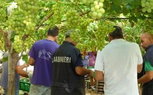 http://www.seguonews.it/contrasto-al-caporalato-nelle-campagne-di-caltanissetta-i-carabinieri-scoprono-15-operai-fantasma-multe-per-50mila-euro