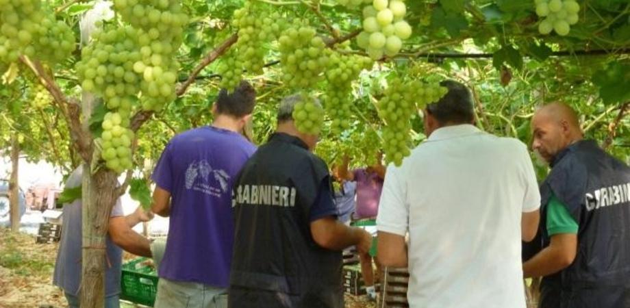 """Contrasto al caporalato nelle campagne di Caltanissetta. I carabinieri scoprono 15 operai """"fantasma"""", multe per 50mila euro"""