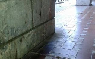 http://www.seguonews.it/quel-grosso-sorcio-che-passeggia-in-viale-della-regione-citta-nel-degrado-in-attesa-del-pifferaio-magico