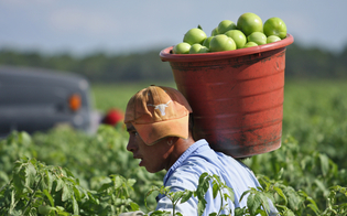 https://www.seguonews.it/a-caltanissetta-la-giornata-mondiale-per-la-cura-del-creato-ludc-accanto-agli-agricoltori