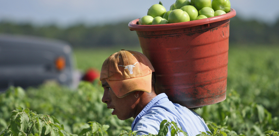 """""""Pane amaro"""". Nicosia presenta il libro sulla schiavitù agricola nel Vallone"""