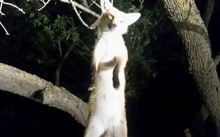 http://www.seguonews.it/orrore-a-serradifalco-cucciolo-di-volpe-impiccato-a-un-albero-la-foto-shock-fa-il-giro-del-web