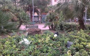 http://www.seguonews.it/caltanissetta-le-foto-dei-lettori-i-rifiuti-crescono-tra-i-cespugli-piazza-della-repubblica-terra-di-nessuno