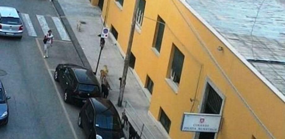 """Branco di cani semina il panico tra i passanti. La risposta dei vigili urbani: """"Interveniamo solo se vi aggrediscono"""""""
