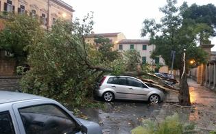 http://www.seguonews.it/il-nubifragio-a-caltanissetta-il-governo-regionale-dichiara-lo-stato-di-calamita-si-attende-il-parere-di-palazzo-chigi