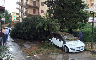 http://www.seguonews.it/nubifragio-a-caltanissetta-le-foto-alberi-su-auto-e-strade-strage-evitata-in-via-liberta-e-imera-devastate-le-bancarelle-del-mercatino