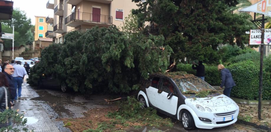Nubifragio a Caltanissetta, le foto. Alberi su auto e strade, strage evitata in via Libertà e Imera. Devastate le bancarelle del mercatino